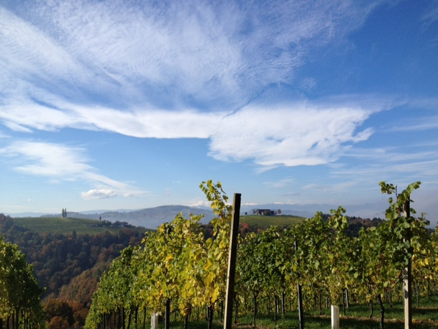 Südsteiermark Weinberge Herbst